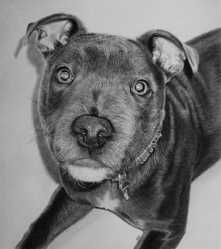 fb_art_kelvin okafor_dog named storm